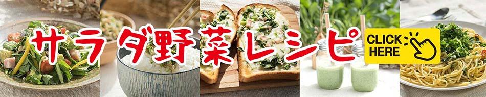 サラダ野菜レシピ